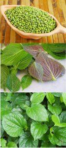 Các loại lá chữa bệnh Gút.