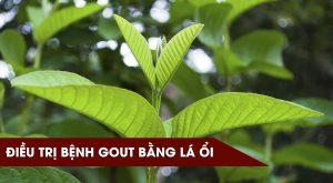 dieu-tri-benh-gut-bang-la-oi